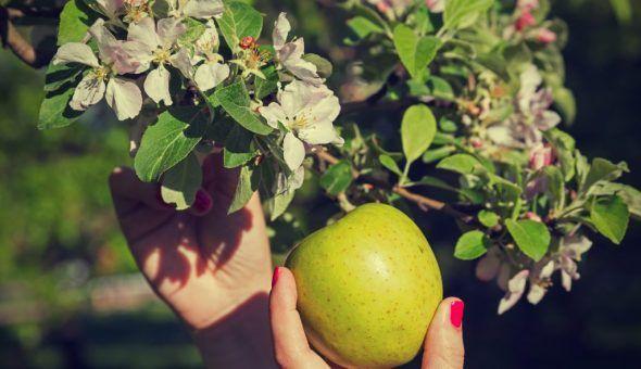 Эффективные заговоры в яблочный спас